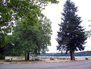 Belfair picnic tables and trees